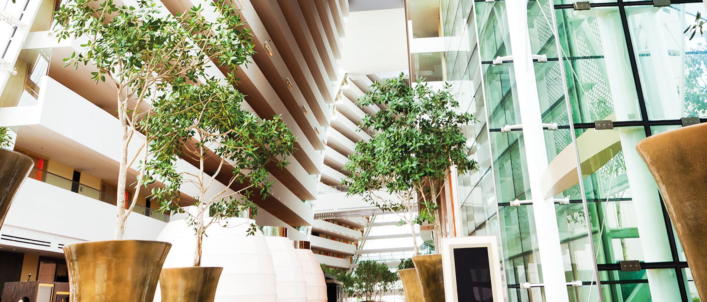 interno di un edificio con 3 piante verdi in vasi