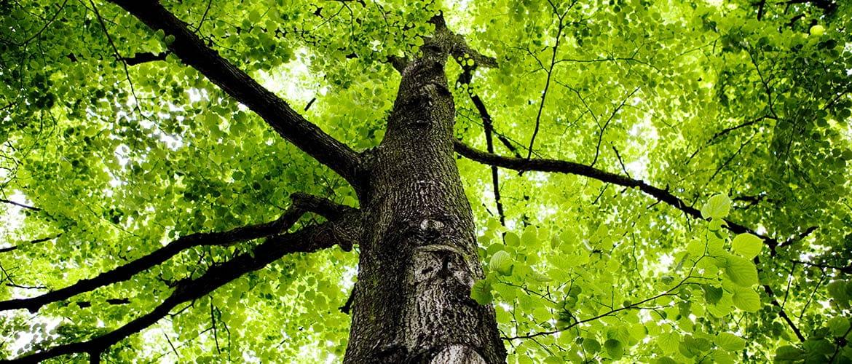 albero carbon footprinter
