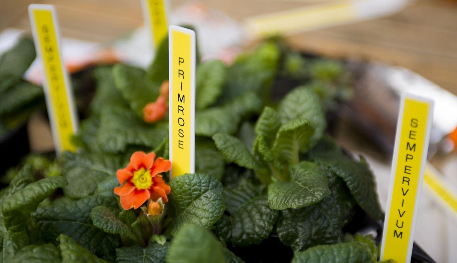 Vasi da giardino etichettati con etichettatrice Brother